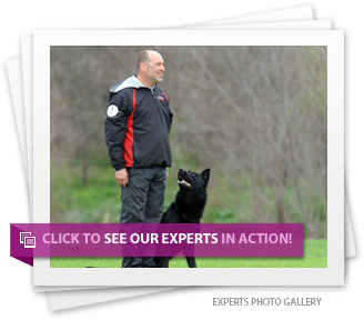 Click to see our experts in action!