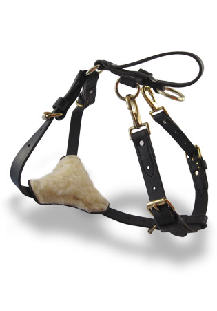 CTS Padded Amish Leather Harness in Collars, Lines & Leads