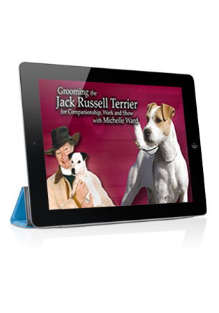 Grooming the Jack Russell Terrier for Companionship, Work and Show with Michelle Ward Streaming