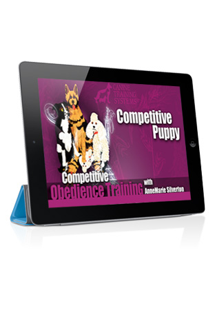 Competitive Obedience with AnneMarie Silverton- Competitive Puppy Streaming