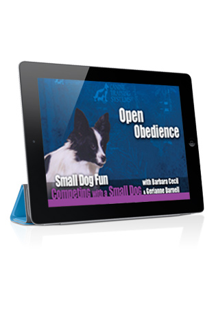 Small Dog Fun Competing with a Small Dog- Open Obedience Streaming